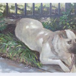 "Dog in Shade - Oils on paper 9""x 12"""